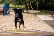 Kładka duża dla psów na wybieg dla psów, psi park