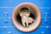 Tunel przejściowy – buda dla psów na wybieg dla psów, psi park